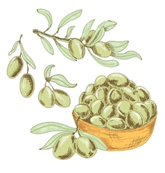 Collection of olives vector image