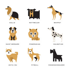Collection of different dogs breeds characters and vector