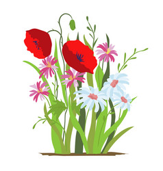 flowerbed flower red poppy set of wild forest vector image
