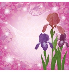 Flowers iris and ipomoea contours vector image