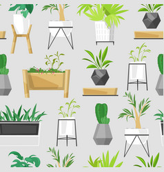 home plants and house pot tropical cacti vector image
