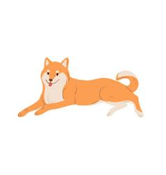 Japanese dog akita-inu breed resting adorable vector