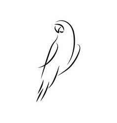 Parrot bird mono line art template vector