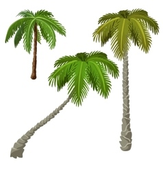 Three palm trees on a white background vector