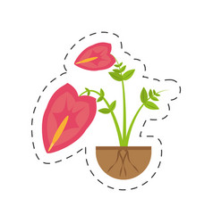 anthurium leaf plant exotic growing vector image