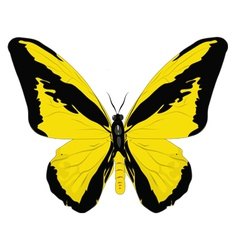Butterfly vector image vector image