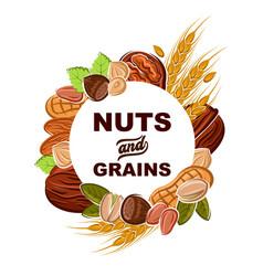 Almond peanut walnut wheat nuts cereals food vector