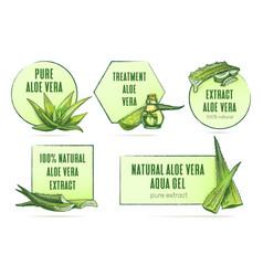 Aloe vera labels set vintage frames vector