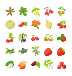 Berry fruit icons pack vector