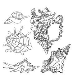 sea shells icon vector image