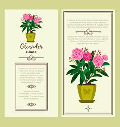 oleander flower in pot banners vector image vector image
