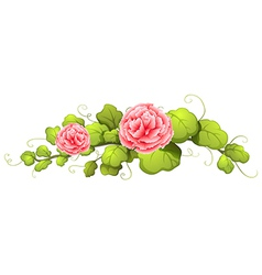A plant with carnation pink flowers vector