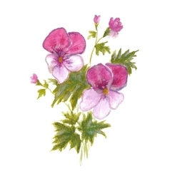 Bush garden pink pansies vector