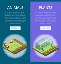 Natural farming isometric vertical flyers vector