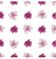 seamless pattern with pink lilies flower on white vector image