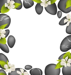 Spa stones with cherry white flowers like frame vector image