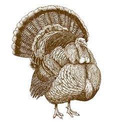 Engraving turkey vector