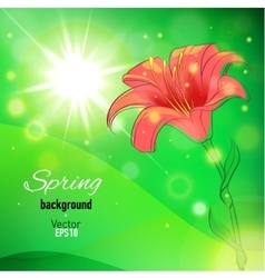 Abstract background for spring with lily flower vector