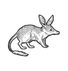 Bandicoot animal sketch engraving vector