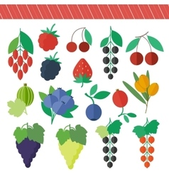 Berries elements set vector