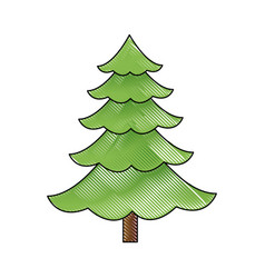 cartoon pine tree natural plant of forest image vector image