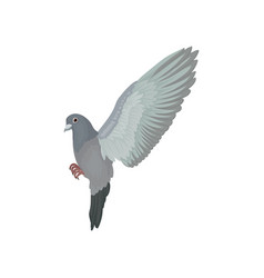 Grey urban pigeon flying on a vector