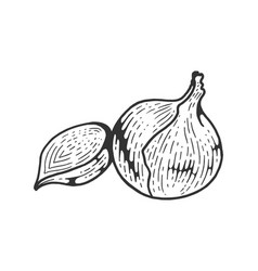 onion vegetable sketch engraving vector image