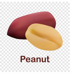 peanut icon realistic style vector image