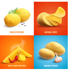 potato realistic 2x2 design concept vector image