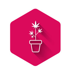 white medical marijuana or cannabis plant in pot vector image