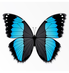 blue and black butterfly vector image vector image