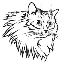cat furry mane vector image vector image