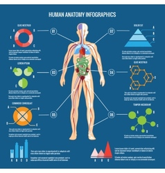 Human Body Anatomy Infographic Design vector image vector image