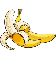 Two ripe bananas one open another unopened and vector image