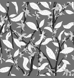 black and white cacao tree branches in bloom vector image