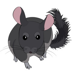 cartoon of cute chinchilla vector image