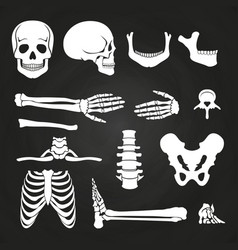 Human bones collection on chalkboard vector