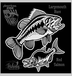 Largemouth bass and red salmon - fishing on usa vector
