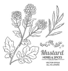 mustard plant isolated on white background vector image