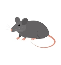 rat animal isolated icon vector image