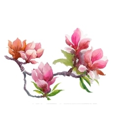 Watercolor Summer blooming pink magnolia flowers vector image