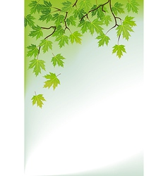 a branch of maple vector image vector image