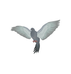 Grey urban pigeon with outstretched wings vector