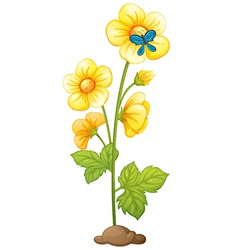 A yellow flower and a blue butterfly vector image