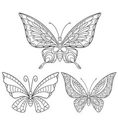 entangle stylized collection butterflies vector image