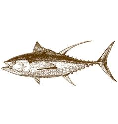 Engraving tuna vector