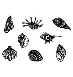 Sea shells and mollusks vector