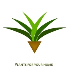 Houseplant with leaves in a pot icon vector image
