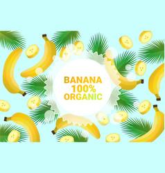 Banana fruit colorful circle copy space organic vector