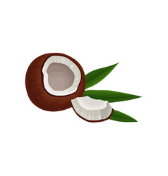 broken coconut with piece and green leaf tasty vector image
